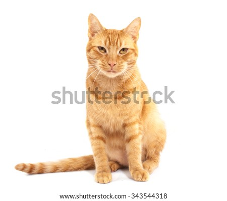 red cat isolated on a white background - stock photo