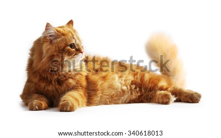 Red cat isolated on white