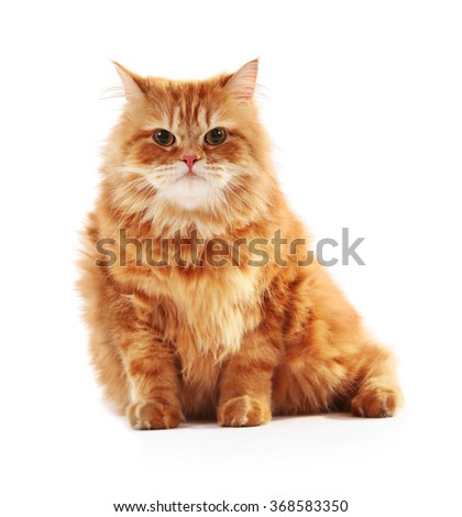 Red cat isolated on white - stock photo