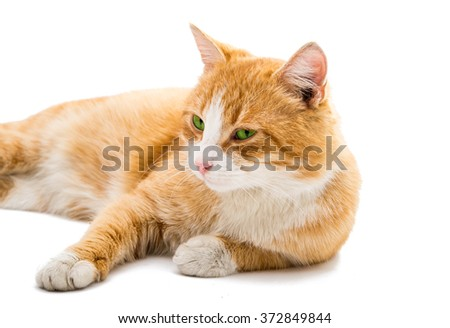 red cat isolated on white background - stock photo