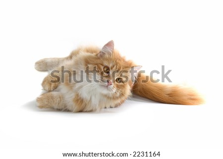 red cat laying on the ground - stock photo