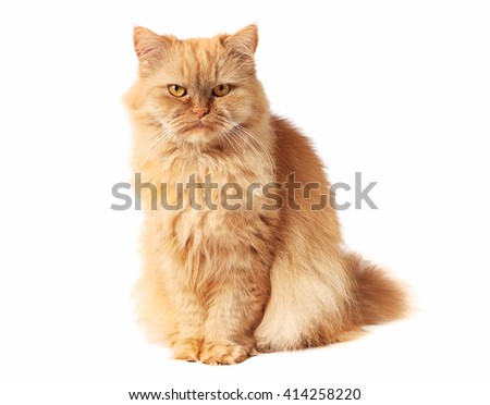 Red cat looking at the camera - stock photo