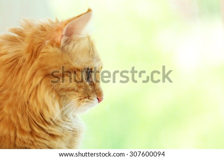 Red cat looking through window, closeup - stock photo