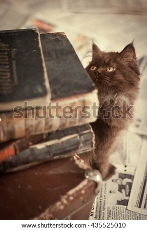 red cat looks at a stack of books - stock photo