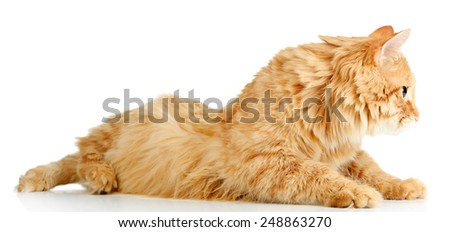 Red cat lying, isolated on white background - stock photo