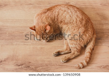 Red Cat Lying On Laminate Background - stock photo