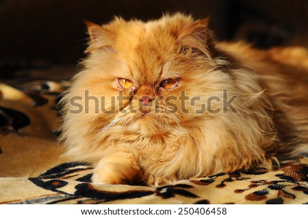 Red cat lying on the sofa. - stock photo