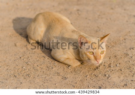 Red cat lying on the soil. It looks at things interesting. Selective Focus. - stock photo