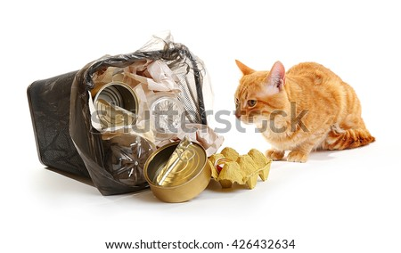 Red cat near full inverted garbage basket, isolated on white - stock photo