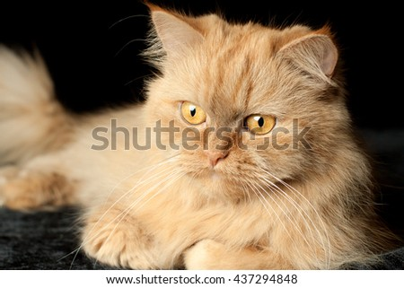 red cat on a black background - stock photo
