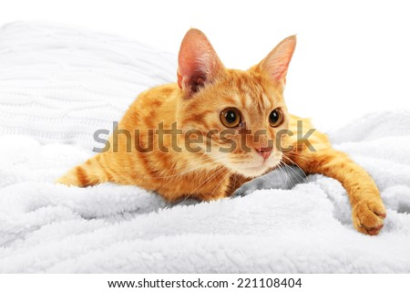 Red cat on blanket on fabric background - stock photo