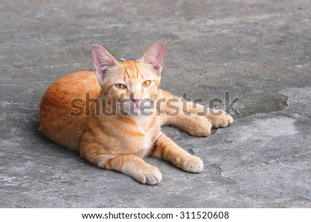 red cat on concrete background