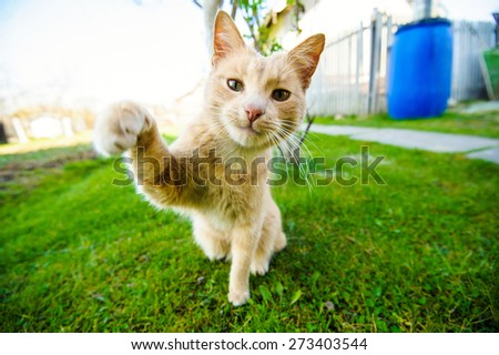 Red cat on green grass - stock photo