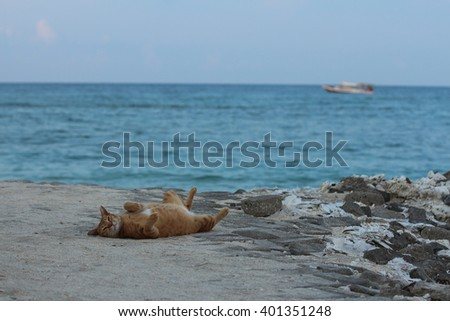 Red cat on the beach