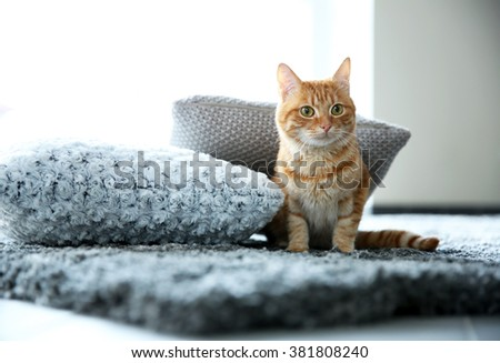 Red cat on the floor, close up - stock photo