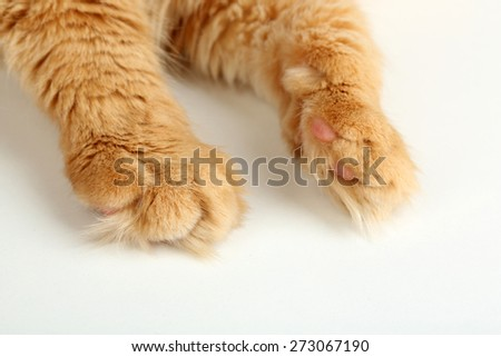 Red cat paw isolated on white background - stock photo