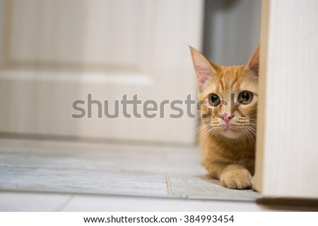 red cat peeking out from behind the door & Cat Door Stock Images Royalty-Free Images \u0026 Vectors | Shutterstock Pezcame.Com