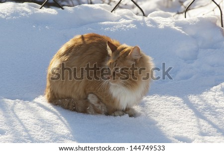 Red cat sits on a snow under the sun near the wire fence