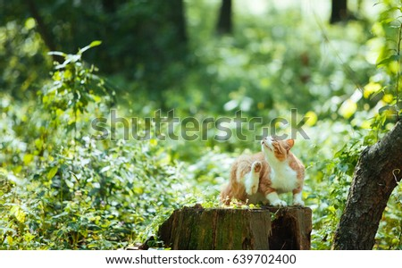 red cat sitting on a stump