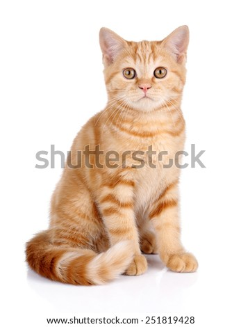 Red cat sitting on a white background - stock photo