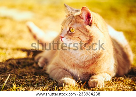 Red cat sitting on green spring grass. Outdoor summer day portrait - stock photo