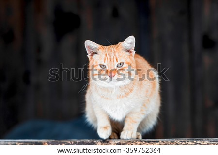 Red cat sitting on the porch of wooden house. - stock photo