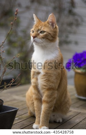 Red cat sitting tall on a garden table - stock photo