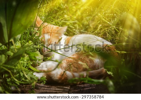 Red cat sleeping in the grass. - stock photo