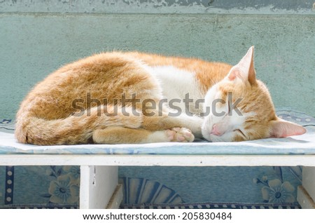 red cat sleeping on a Bookcase.