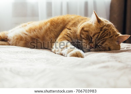 red cat sleeps on the bed