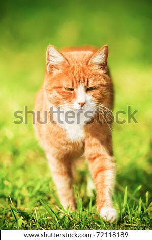 Red cat squinting in the bright sun