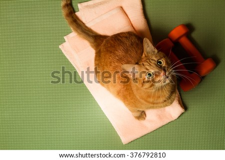 Red cat with a dumbbell in the sports mat. Sports concept - stock photo