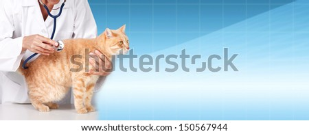 Red cat with veterinarian doctor. Veterinary clinic. - stock photo