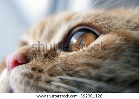 Red cats eye. close up. Close up image of cat's eye - stock photo