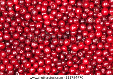 red cherry background - stock photo