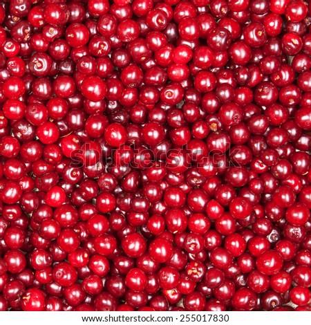 red cherry background - stock photo