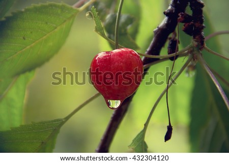 Red Cherry with Dew Drop
