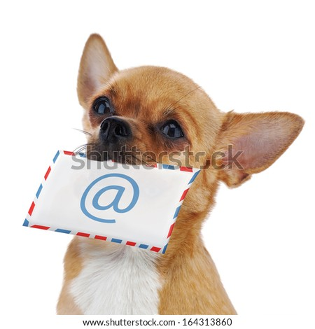 Red chihuahua dog with post envelope and icon e-male isolated on white background. Closeup. - stock photo