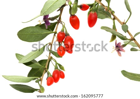 red chili pepper on the bush on a white background