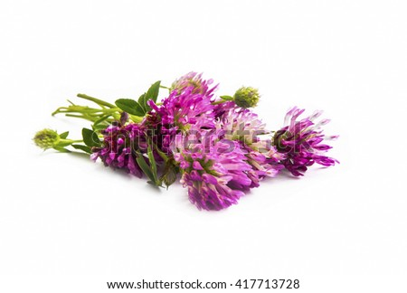 Red clover.Trifolium pratense isolated on white