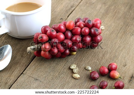 Red coffee beans on a branch. - stock photo