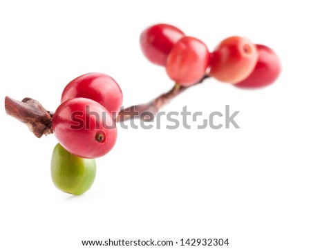 Red coffee beans on branch of coffee tree, ripe and unripe berries isolated on white background - stock photo