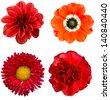 Red collage flowers - stock photo