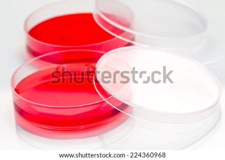 red color liquid solution in petri dishes - stock photo