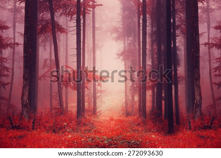 Red color saturated foggy fantasy forest scene with path. Filter color effect used. - stock photo