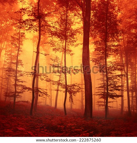 Red colored fantasy autumn forest scene. Filter color effect used. - stock photo
