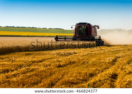 red combine harvester harvesting wheat