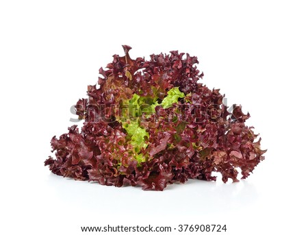 red coral salad isolated on the white background . - stock photo