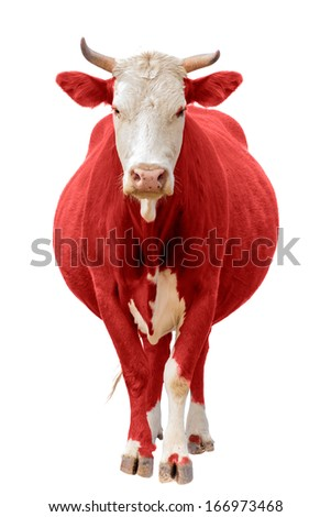 Red Cow isolated on white - stock photo