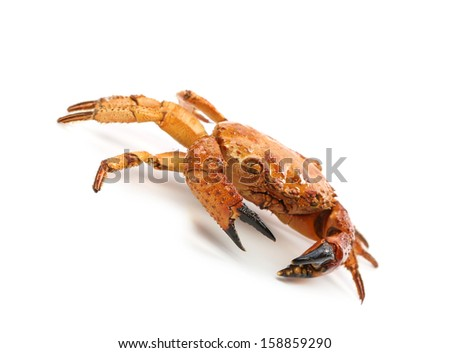 Red crab close up. Isolated on a white background - stock photo